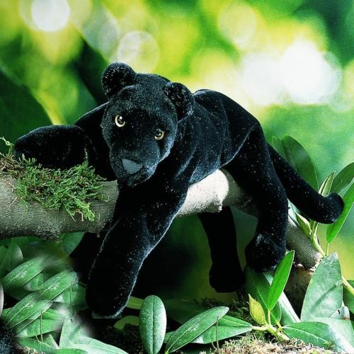 K 246 Sen Usa 4530 Nalini Black Panther