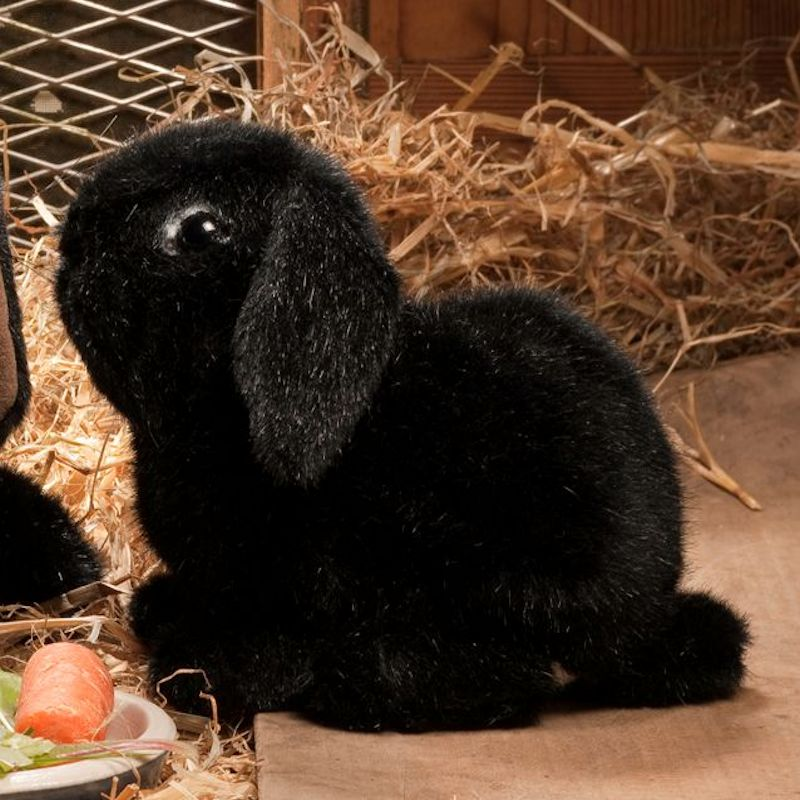 Kosen Usa 6161 Skipper Dwarf Lop Eared Bunny Rabbit Black