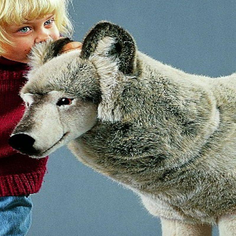 Kosen Usa 4370 Lobo Wolf Studio