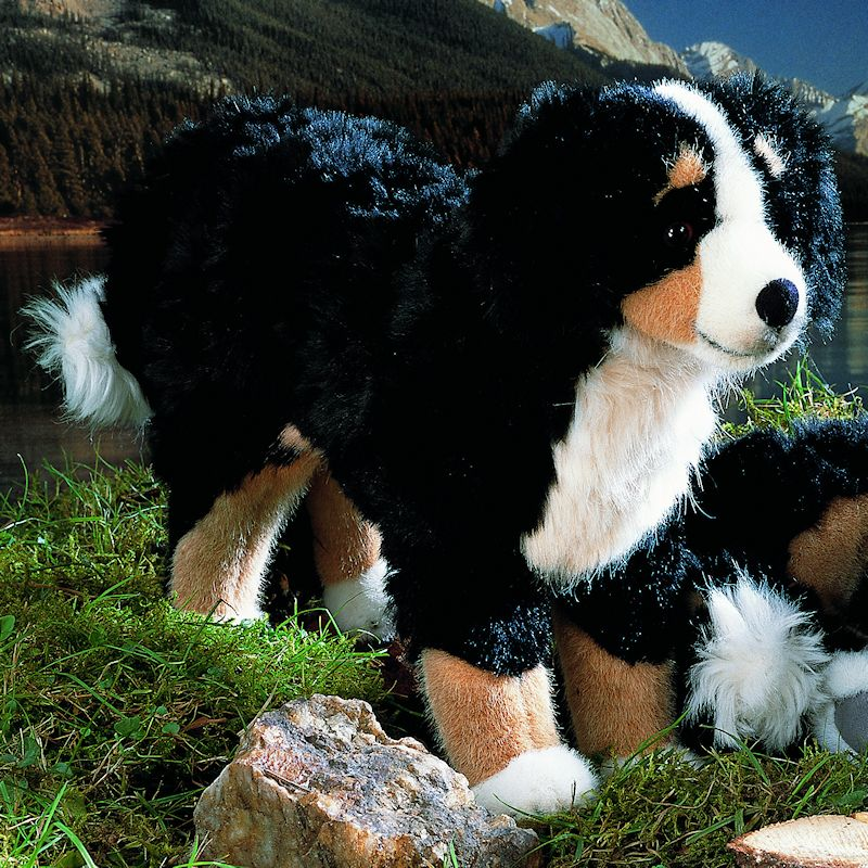 Kosen Usa 4720 Roman Bernese Mountain Dog