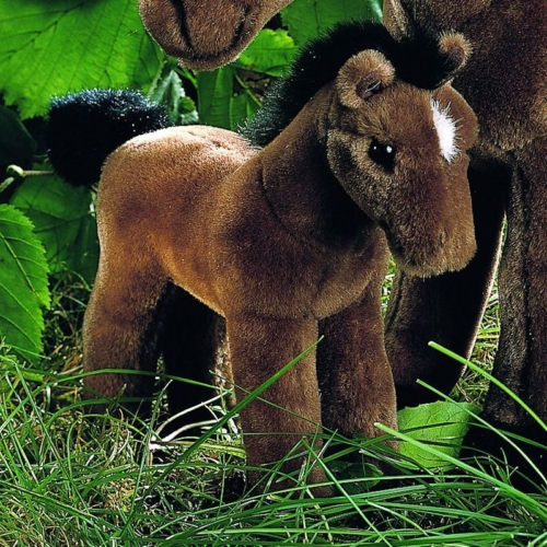 Horse Kosen Usa