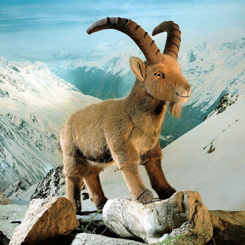 Ibex Goat Kösen-USA - 51...