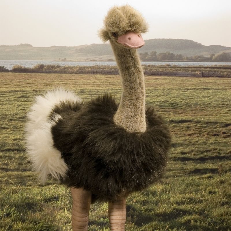 Ostrich Size
