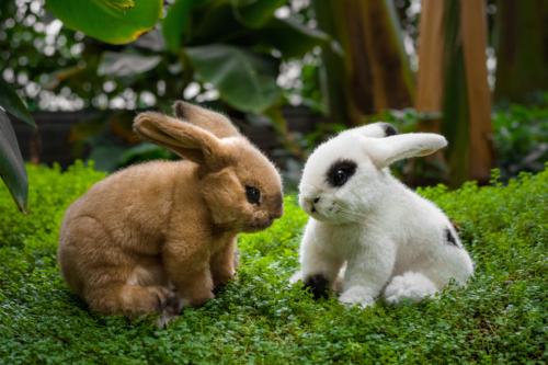 k246senusa 6981 �sahara� beige bunny rabbit
